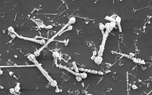 Electron Microscopy Service